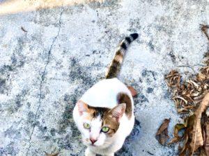 貓攝影作品 2