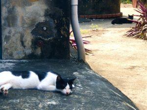 貓攝影作品 6