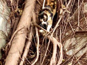 貓攝影作品 8