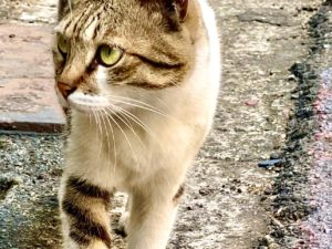 貓攝影作品 5