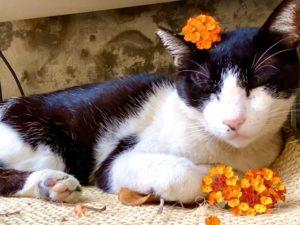 喜歡花的貓
