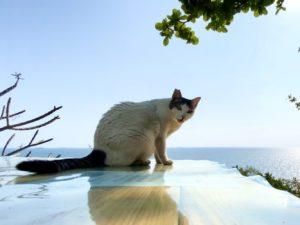 貓攝影作品