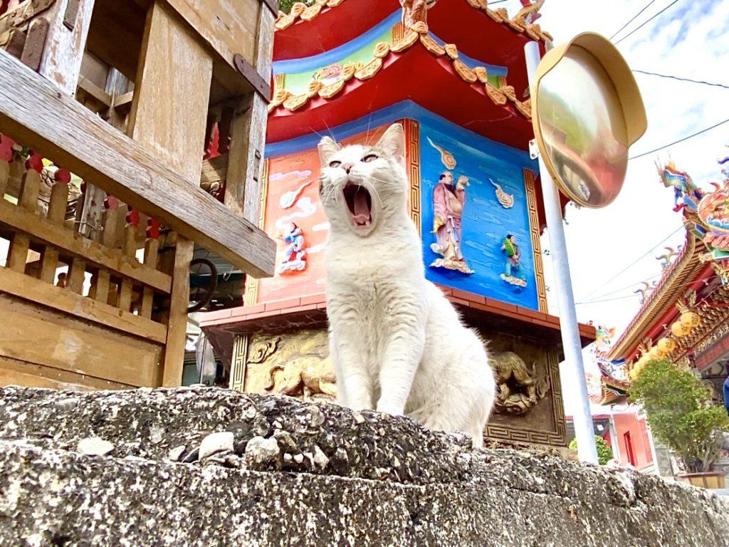 貓攝影封面