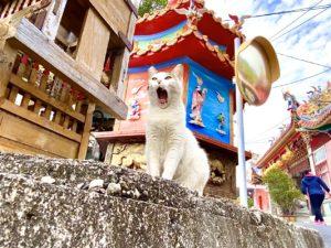 貓攝影封面 2