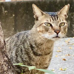 新詩賞析 cat