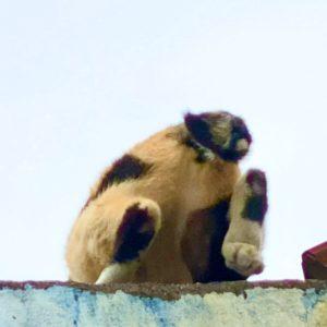 屋頂上的貓姑娘